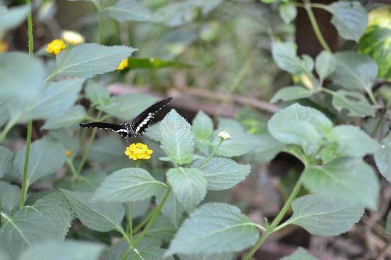 Montegrotto Terme, Włochy: Farfalla in volo