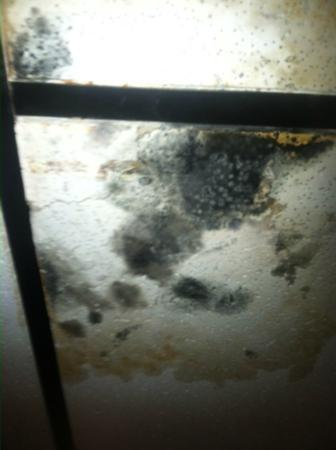 Super 8 Thurmont: Black mold on the ceiling tiles in hallway first floor.