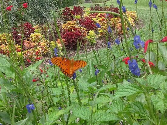 Mounts Botanical Garden: Butterfly Garden