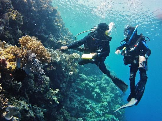 Wakatobi Dive Resort: kaz, our private dive guide is teaching my 10 years old doughter