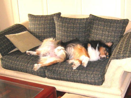 Beachwalk Bed and Breakfast: Beachwalk's off-duty watch dog!