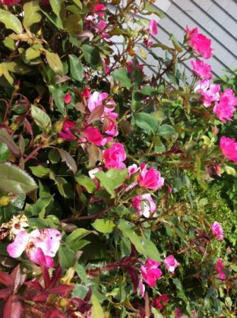 Dock Side Restaurant: roses at entrance of Dockside restaurant