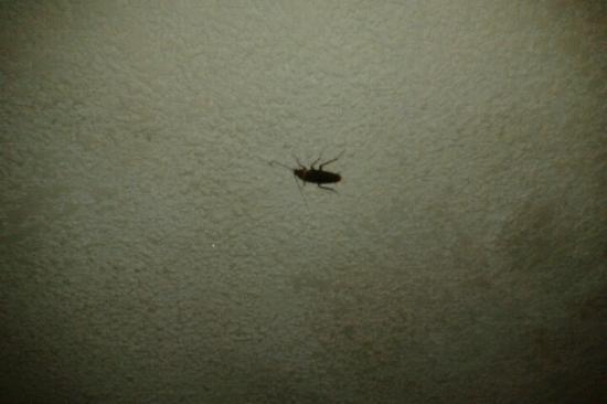Hotel San Felipe: Las molestas cucarachas