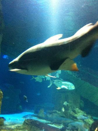 Sealion Show Picture Of Long Island Aquarium
