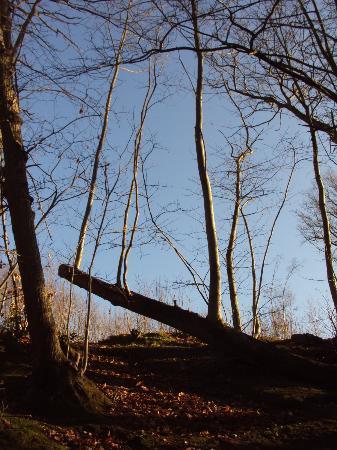 RSPB Reserve Blean Woods: Blean woods