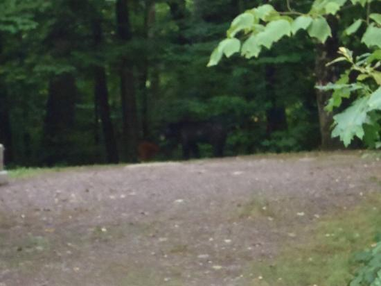 North-South Lake Campground : bear