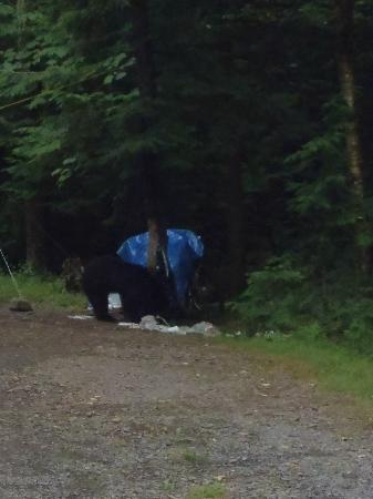 North-South Lake Campground: bear