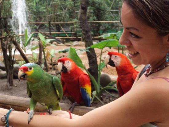 Parque Museo La Venta : En el aviario de la Venta tabasco