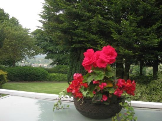 Stoney Ridge: Balcony Flowers