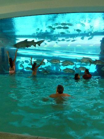 The Pool With Shark Tank Picture Of Golden Nugget Hotel Casino Las Vegas Tripadvisor