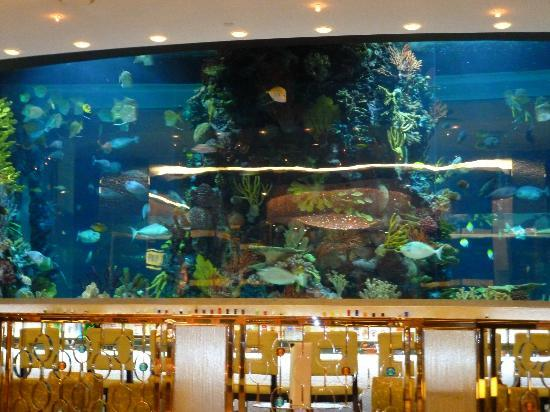 Fish tank near rush tower picture of golden nugget hotel for Fish tank las vegas