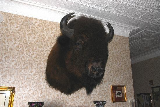The Historic Elk Mountain Hotel: This original head graces the reception area