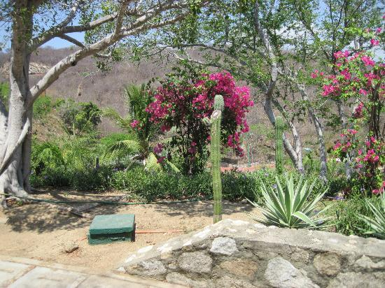 Las Brisas Huatulco: Wander around the grounds to see places like this...