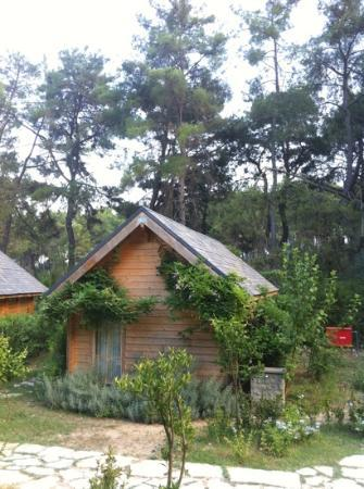 Olympos Village: finland made log houses in nature