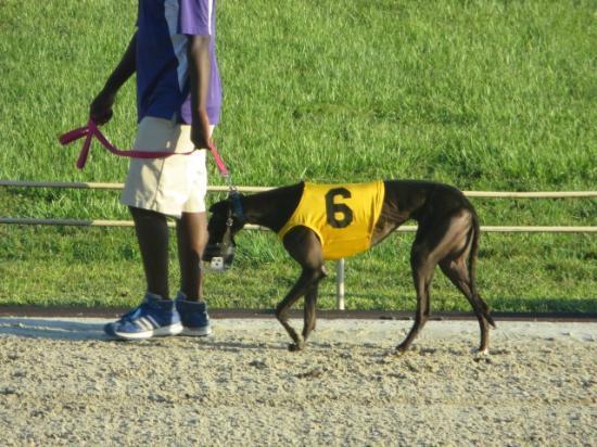 Ebro greyhound poker