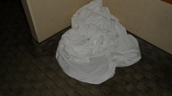 Quality Inn & Suites Bensalem : pullout sheets