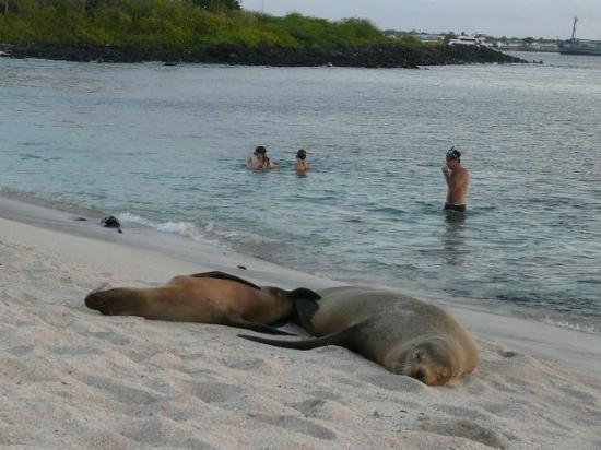 Casa de Nelly: snorkling with the sea lions