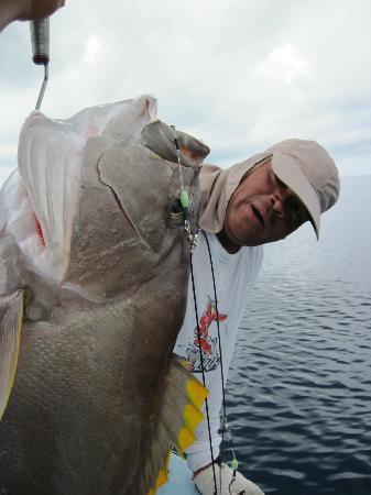 بلو مارلين بيتش ريزورت: Bo eyes the big Yellow Edge Grouper we caught 