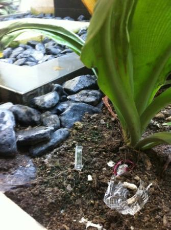 Tir Na Nóg Gili Trawangan Accommodation: lixo de outro hospede no banheiro