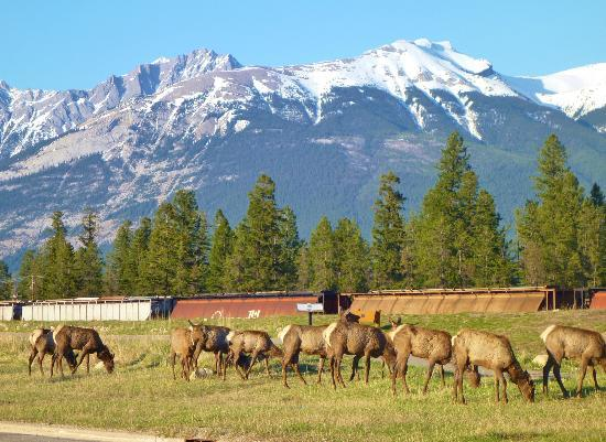 Marmot Lodge: View
