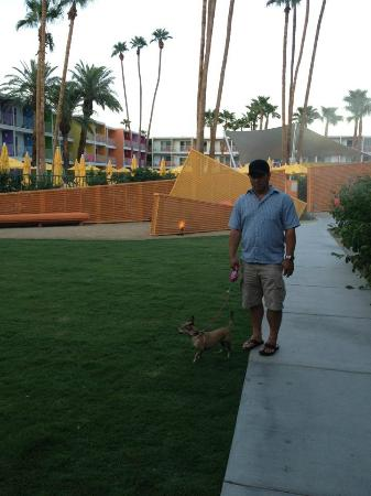 The Saguaro Palm Springs: Grassy Area Outside of Pool