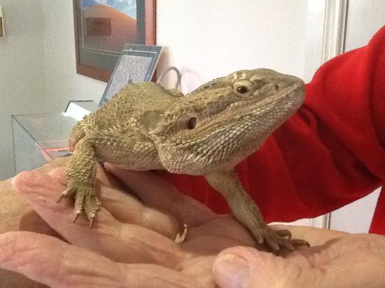 Alice On Todd Apartments: They have a very tame lizard in the reception area.