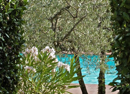 Fattoria La Torre : la piscina tra gli olivi