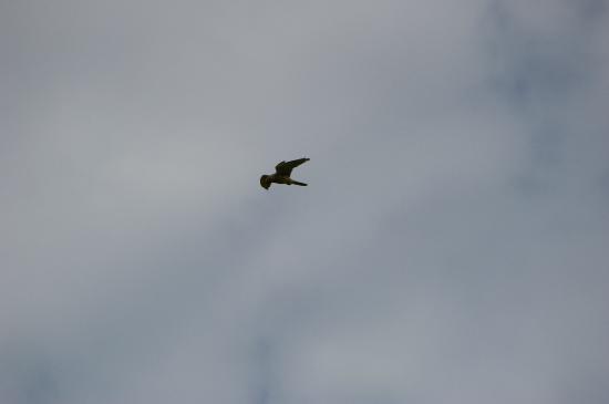 Padstow Sealife Safaris: Bird of Prey