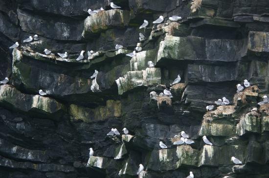 Padstow Sealife Safaris: Birds