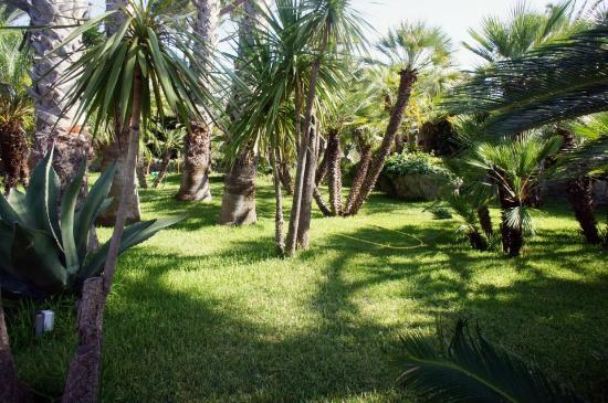Park Hotel Terme Mediterraneo: Park