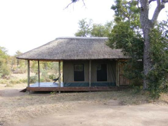 Shindzela Tented Safari Camp: Tent