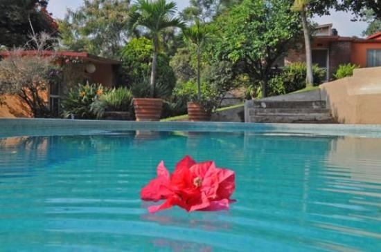 Bungalows Las Rosas : Pool