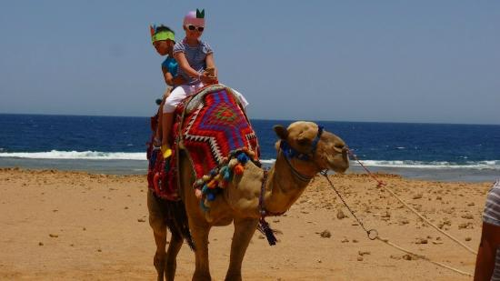 The Three Corners Sea Beach Resort: Camel ride