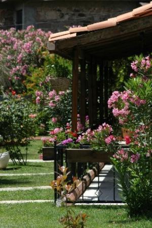 Assos Sardunya Butik Hotel: Bahçe
