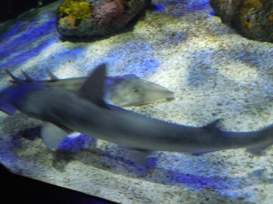 Small Shark Tank Indoor Exhibit Picture Of Mystic