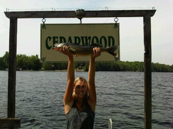 Cedarwood on Lake Muskoka : 8.5lbs Walleye!