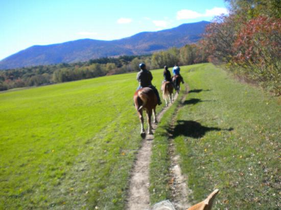 Stables at the Farm by the River: nice group along the trail