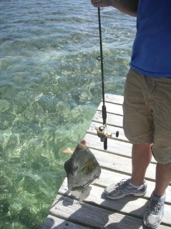 Hobbies Hideaway: fishin from the dock
