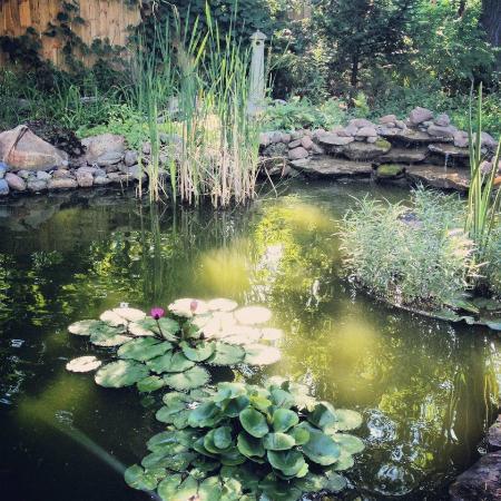 Mary's Meadow Bed and Breakfast: Pond in backyard