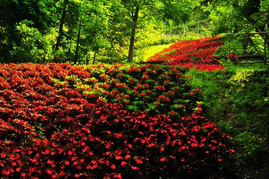 Merano, İtalya: un fiune di fiori