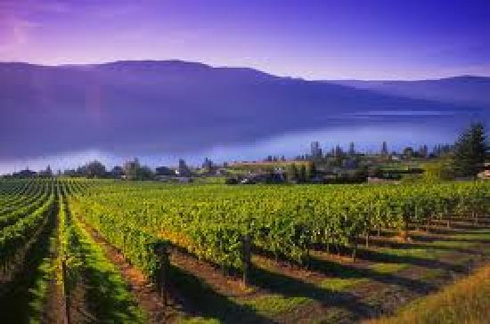 Winelicious Tours