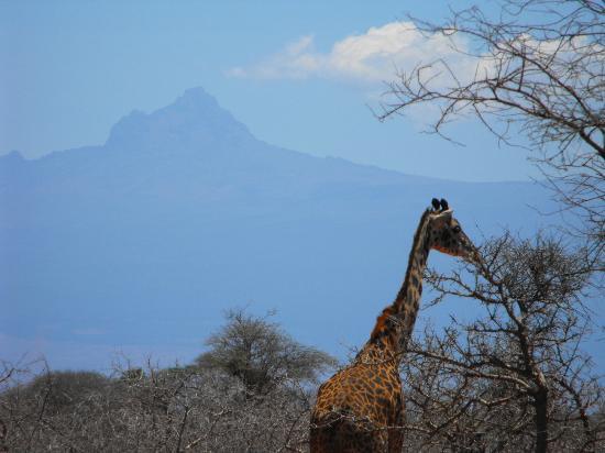 Selenkay Conservancy : Amboseli con lo sfondo del Kilimandjaro