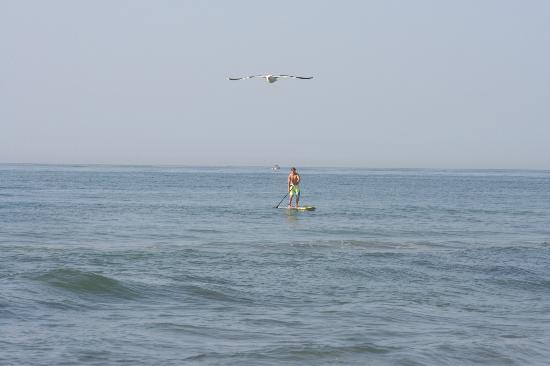 Windward at the Beach: SUP in the ocean...