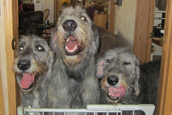 Cimarron Inn and RV Park: Some big happy dogs