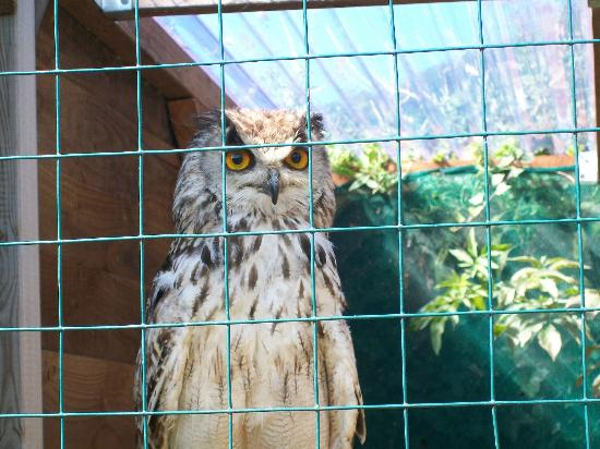 Exmoor Owl & Hawk Centre: Owl enclosures surrounded by beautiful gardens