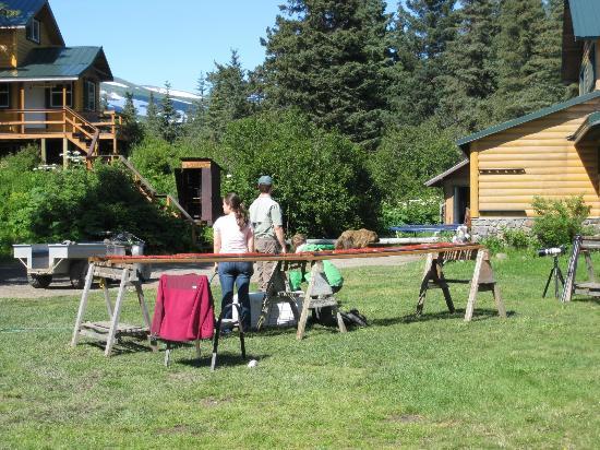 "Silver Salmon Creek Lodge: Bear ambling thru, staff ""guarding"" drying salmon :-)"