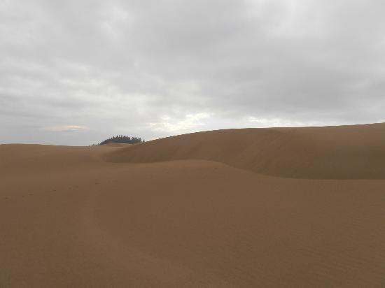 John Dellenback Dunes Trail: No footprints to be seen