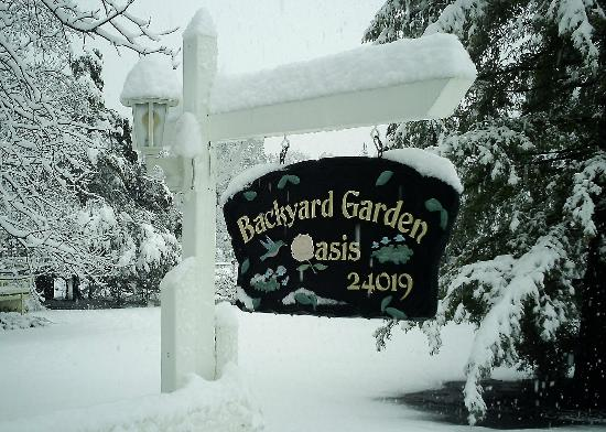 Backyard Garden Oasis B&B : Snow in 2010