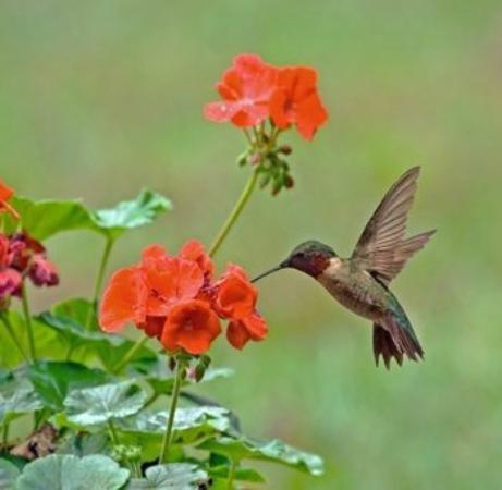 Backyard Garden Oasis B&B: We feed the wildlife