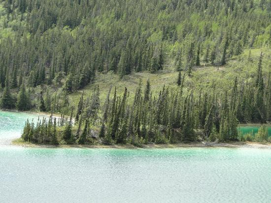 Emerald Lake: Trees come right down to the edge